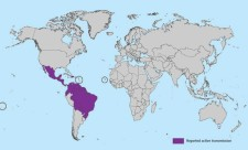 Zika map. Source: CDC